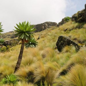 Trekking in the Simien Mountains